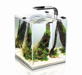 Akvariumas SHRIMP SET SMART 10 Black kaina ir informacija | Akvariumai ir jų įranga | pigu.lt