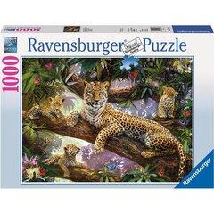 Dėlionė Ravensburger Leopardų šeima 1000 detalių, 191482