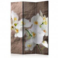 Pertvara - Nepriekaištinga orchidėja [Kambario pertvaros]