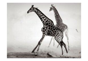 Фотообои - Жирафы
