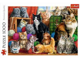 Dėlionė Trefl Cats Meeting 1000 d. kaina ir informacija | Dėlionė Trefl Cats Meeting 1000 d. | pigu.lt