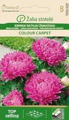 Kininiai ratiliai žemaūgiai Colour carpet kaina ir informacija | Gėlių sėklos | pigu.lt