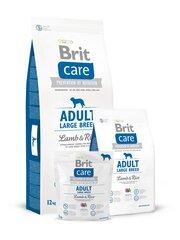 Brit Care Adult didelių veislių šunims su ėriena ir ryžiais, 3 kg kaina ir informacija | Brit Care Adult didelių veislių šunims su ėriena ir ryžiais, 3 kg | pigu.lt