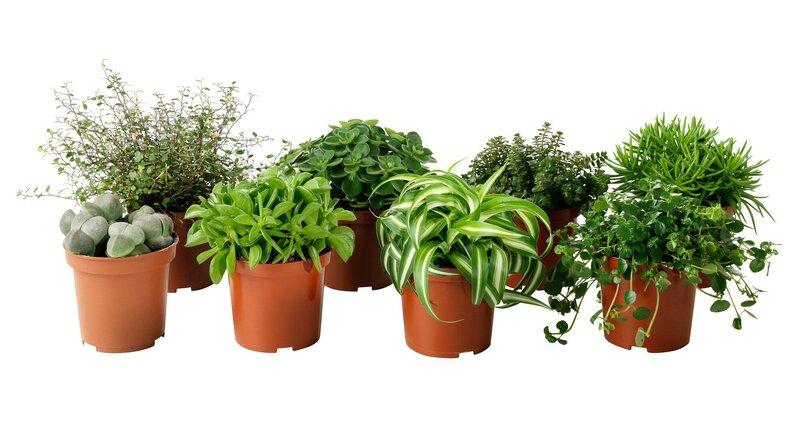 """Komplektas gyvų augalų paveikslui sukurti """"Hang Oasi Home"""" atsiliepimas"""